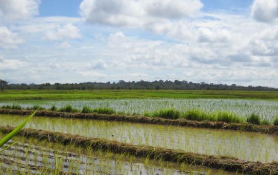 Guinea Bissau: un aggiornamento da Antula