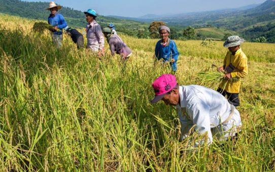 Thailandia: la vita missionaria a Mankhaw